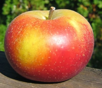 Apple, Sciros, Small