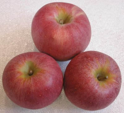 Apple, Winesap, Small