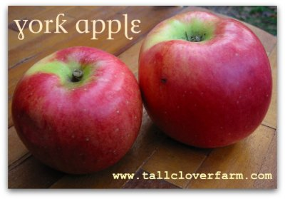 Organic, Apple, York, Small