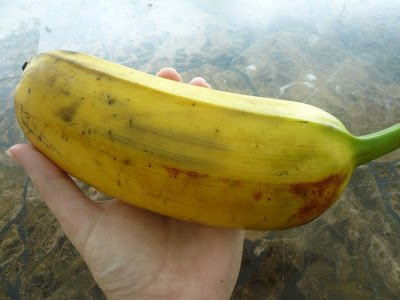 Banana, Hawaiian, Plantain