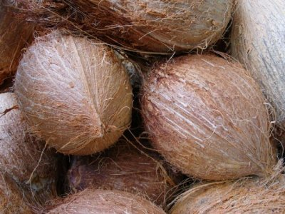 Coconut, In Husk / Waternut