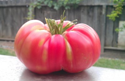 Tomato, Vine, Ripe, Regular, Large, Red